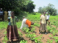 Livelihoods and food security pic